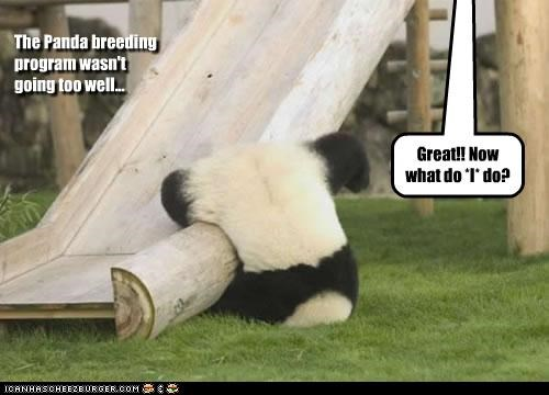 The Panda breeding program wasn't going too well... Great!! Now what do *I* do?