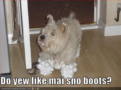 boot cairn terrier legs shoes snow