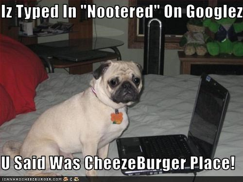 Cheezburger Image 2910371584