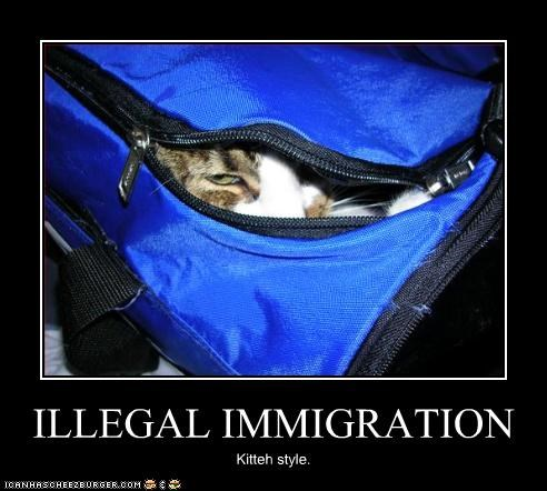 ILLEGAL IMMIGRATION Kitteh style.