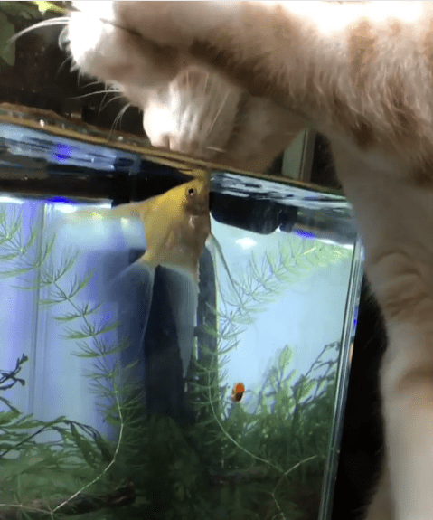 unique friendship bwtween a cat and a fish