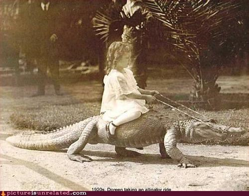 alligator,gator rides,little girl,old timey,transportation,why,wtf