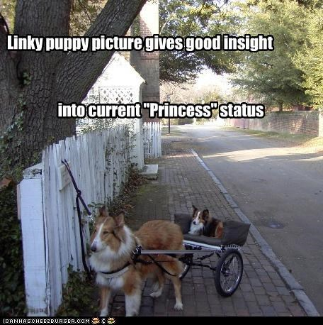 "Linky puppy picture gives good insight into current ""Princess"" status"