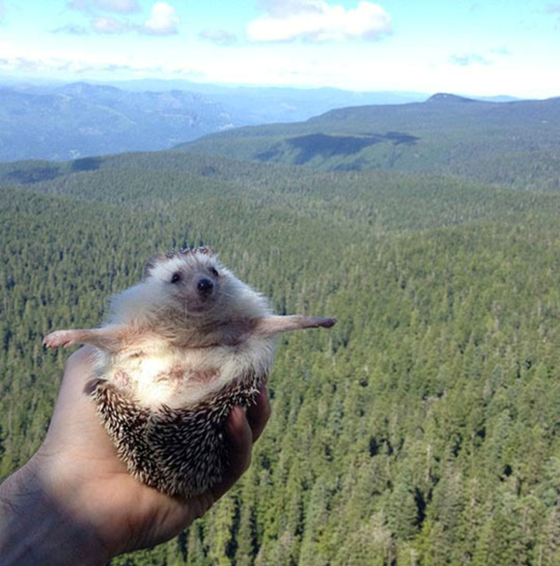 a very cute picture of a hedgehog opening his arms and taking a pic in the wild - cover for a list of biddy's traveling adventures
