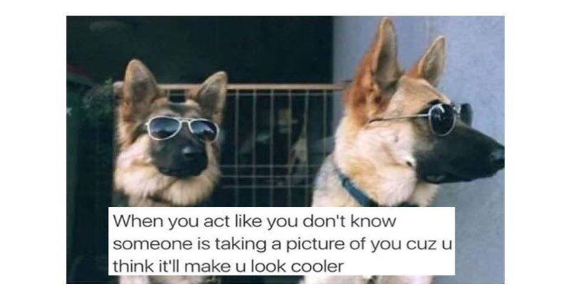 Collection of funny dog memes from instagram account chaos.reigns.