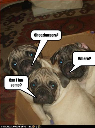 Cheezburger Image 2913350656