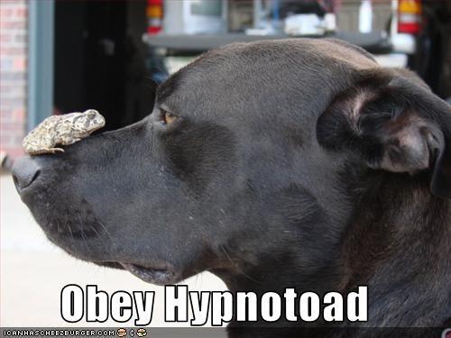 frog,hypnosis,labrador,obey,toad