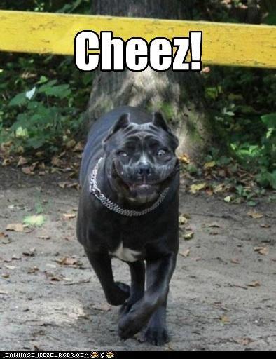 Cheezburger Image 2914140160