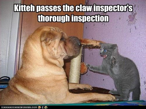 Kitteh passes the claw inspector's thorough inspection