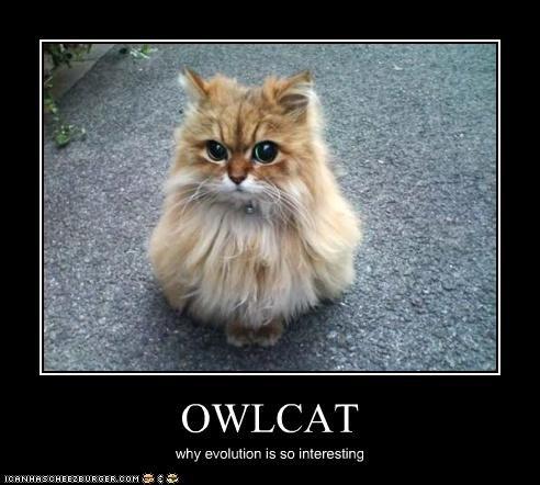 OWLCAT why evolution is so interesting