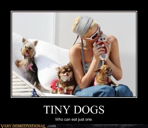 tiny dog food delicious funny - 2918545408