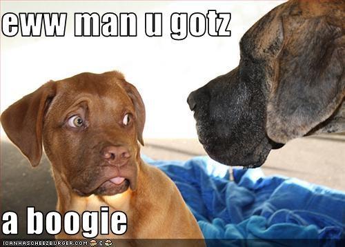 Cheezburger Image 2921181952