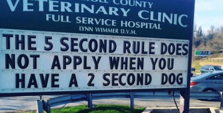 funny vet signs