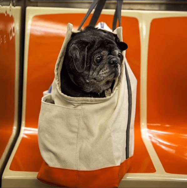 photos of dogs in the subway
