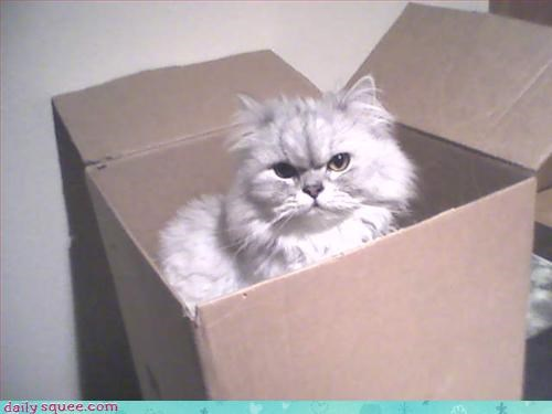 box cat grouch