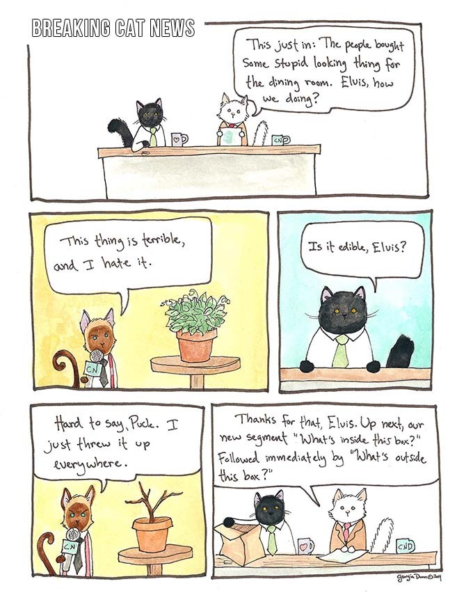 a very funny comic of a cat giving the news report about something the owners bought - cover for a list of funny comics by georgia dunns and her cats day to day life