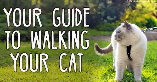Helpful guide for walking your cat