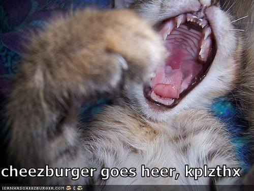 Cheezburger Image 2924395008