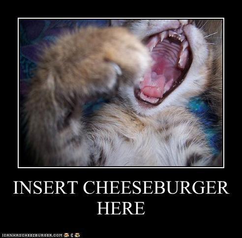 Cheezburger Image 2925114624