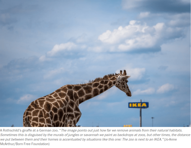 a new book with photos of captivated animals
