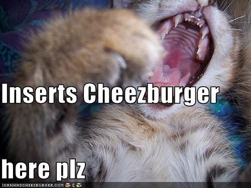 Cheezburger Image 2928494848