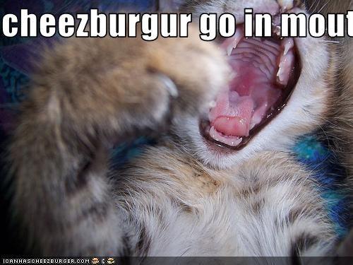 Cheezburger Image 2928849920