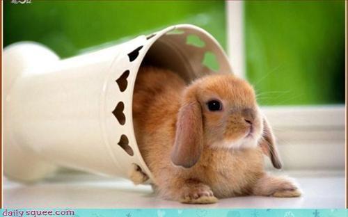 bunny in stuff rabbit - 2929205248