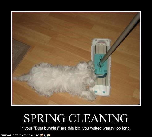 """SPRING CLEANING If your """"Dust bunnies"""" are this big, you waited waaay too long."""