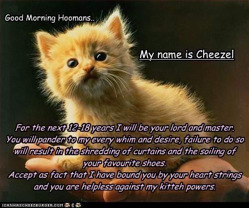 Cheezburger Image 2932328704