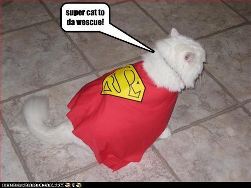 super cat to da wescue!