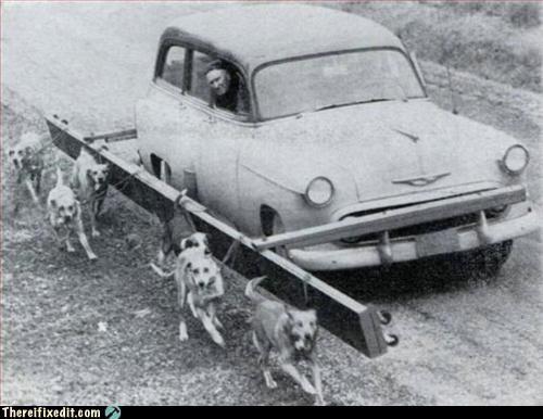 car dogs mod vintage - 2934583296