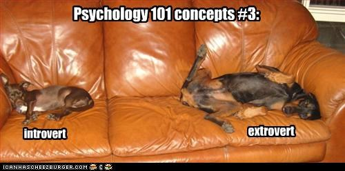 belly doberman pinscher legs psychology spread thighs whatbreed - 2936021760