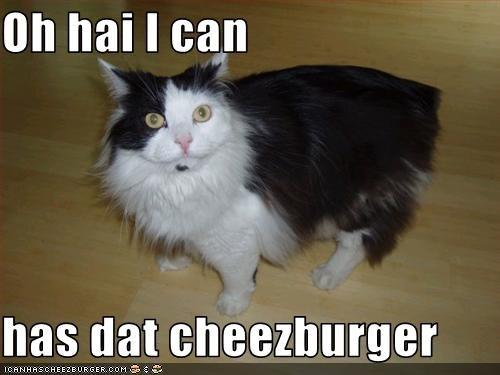 Cheezburger Image 2938202880