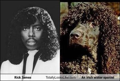 Rick James Totally Looks Like An irish water spaniel