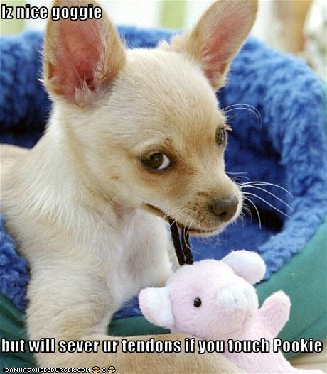 chihuahua nice overprotective protective stuffed toy teddy bear - 2939549184
