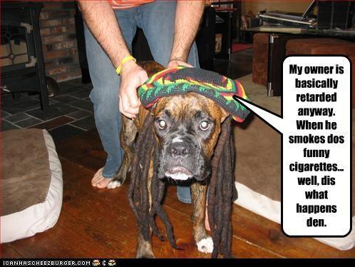 Cheezburger Image 2939652608