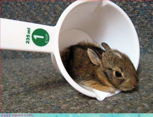 bunny cute sweet - 2939851520