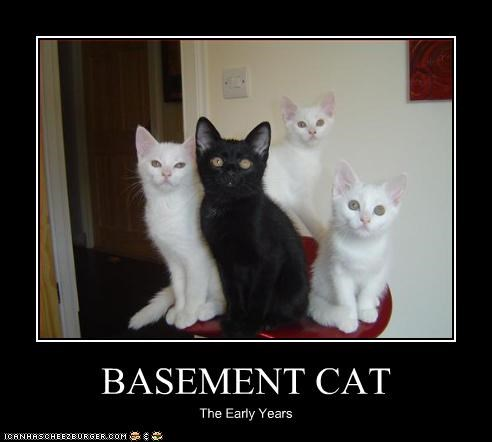 BASEMENT CAT The Early Years