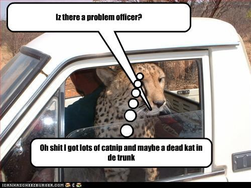 Iz there a problem officer? Oh shit I got lots of catnip and maybe a dead kat in de trunk