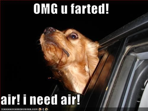 cars fart golden retriever gross head window - 2940550400