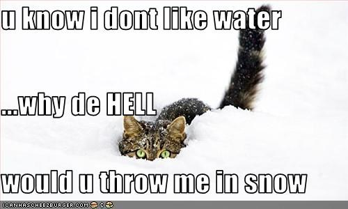 U Know I Dont Like Water Why De Hell Would U Throw Me In Snow