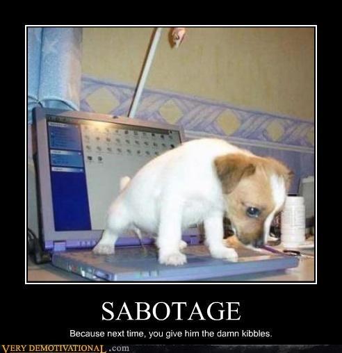 kibble puppy peepee sabotage funny - 2941738240