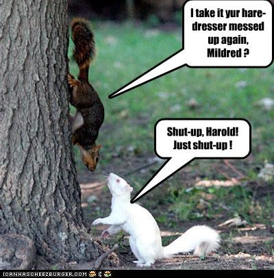 I take it yur hare-dresser messed up again, Mildred ?