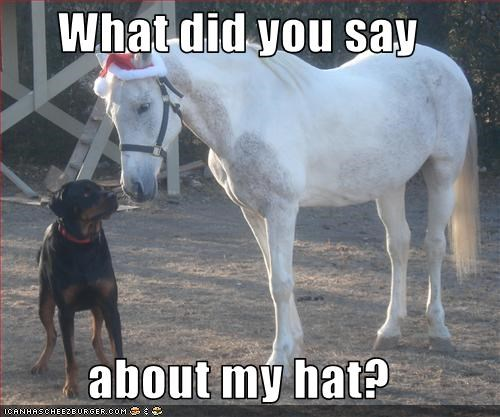 hat horse intimidating rottweiler