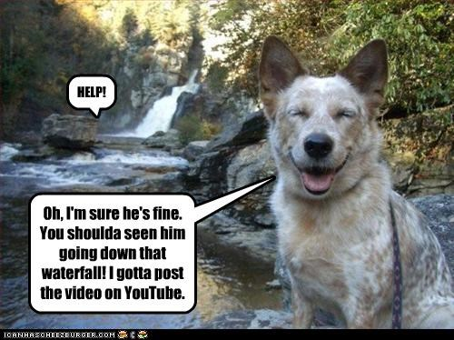australian cattle dog,blue heeler,help,river,Video,water,youtube