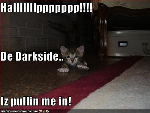 dark side,halp,kitten,oh noes