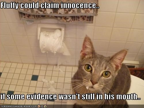 bad cat,destruction,innocent,mess,toilet paper