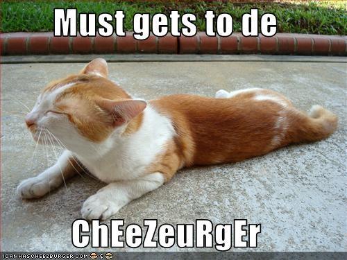 Cheezburger Image 2943882752