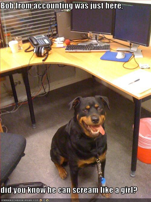 girl intimidating Office rottweiler scary scream tough work