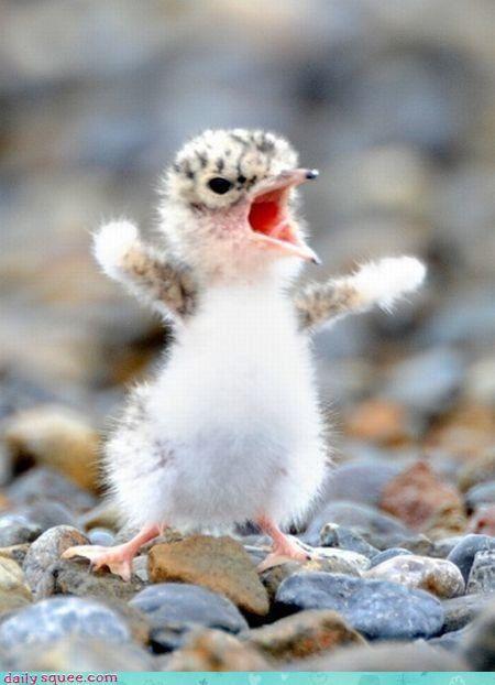 bird,bossy,grumpy